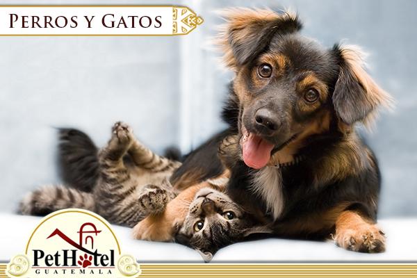 """Mito del """"como perros y gatos"""""""