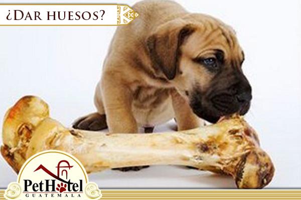 Mito sobre alimentarlo con huesos