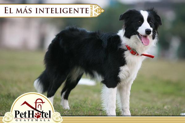 La inteligencia canina