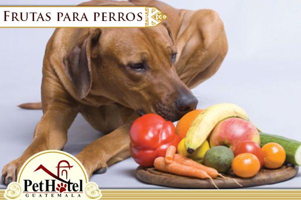 Frutas para tu perro