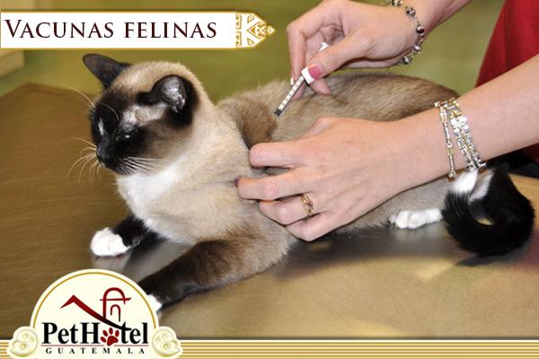 Vacunas felinas