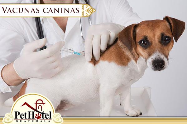 Vacunas caninas