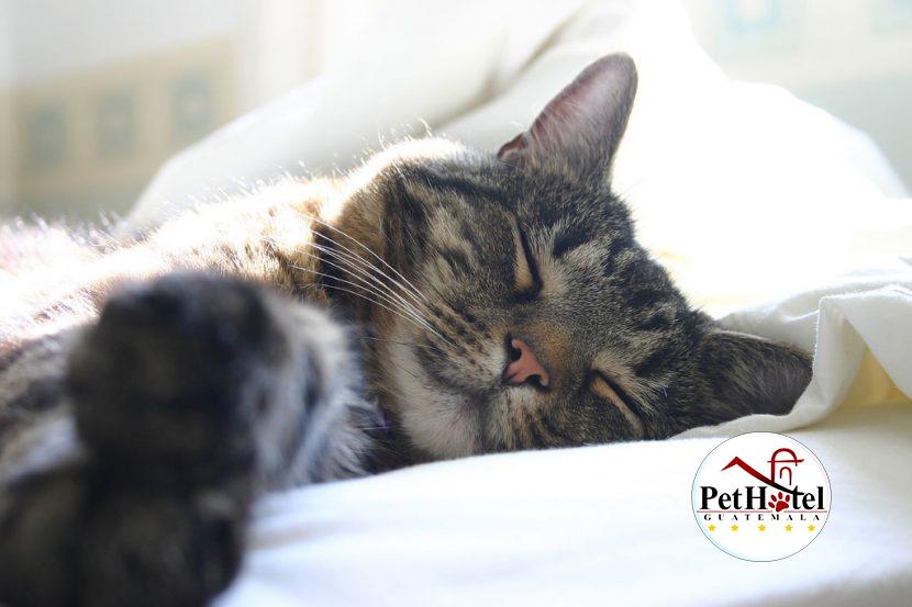A tu gato le gusta tu almohada o duerme contigo…